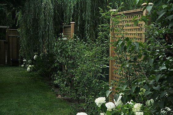 chain link fence trellis